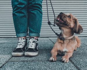 Should dogs be allowed in school