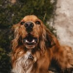 Can Too Much Protein Make My Dog Itch? (Explained!)