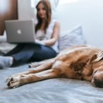 Why Is My Dog Breathing Fast While Sleeping? (Answered!)