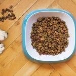 My Dog Gorged On Dry Food! (Helpful Tips!)