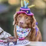 How Do I Know If My Dog Likes Daycare? (Solved!)