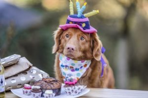 how do i know if my dog likes daycare