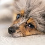 Is Ylang Ylang Safe For Dogs? (Answered!)