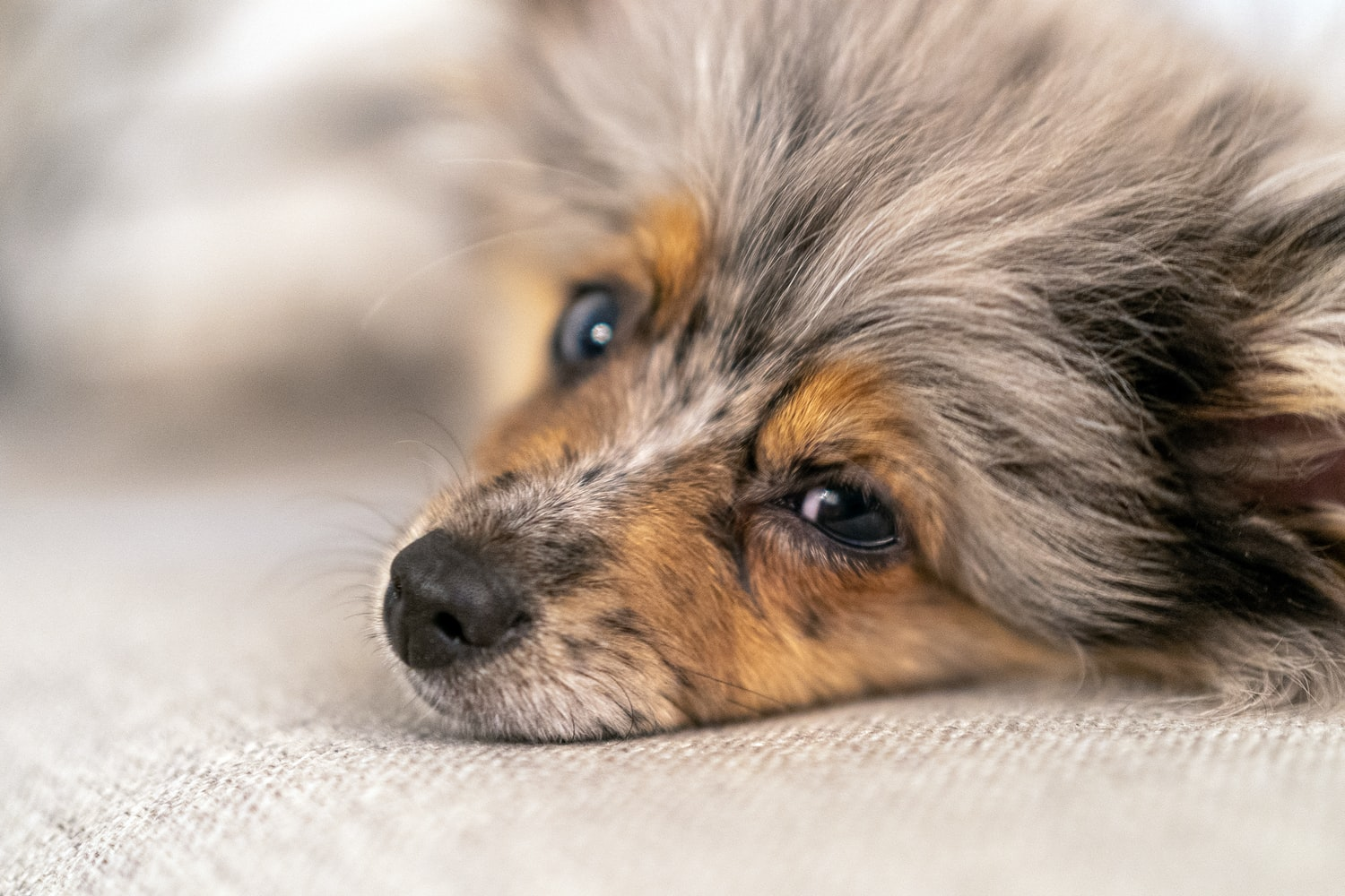 is ylang ylang safe for dogs