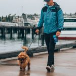 Why Does My Dog Walk On My Right Side?  (Answered!)
