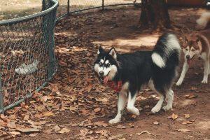 is coconut husk safe for dogs