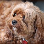 Is Dog Deodorant Safe?  (Solved!)