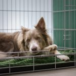 Should A Dog Be Able To Sit Up In A Crate?  (Answered!)