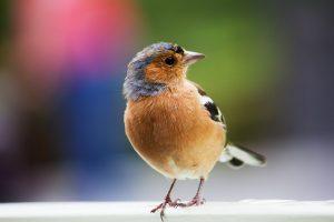 Can birds eat almonds