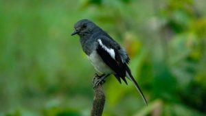 can birds eat sesame seeds