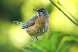 can birds eat diatomaceous earth