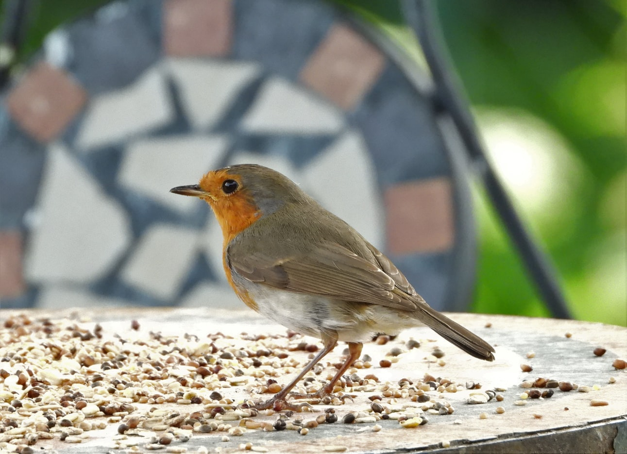 can birds eat instant oatmeal