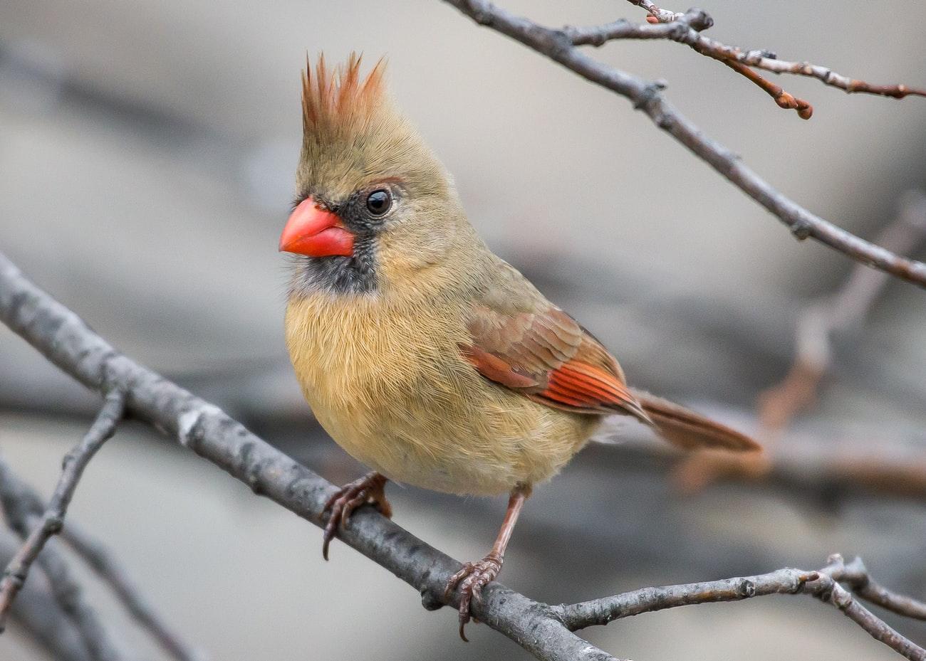 can birds eat garlic bread