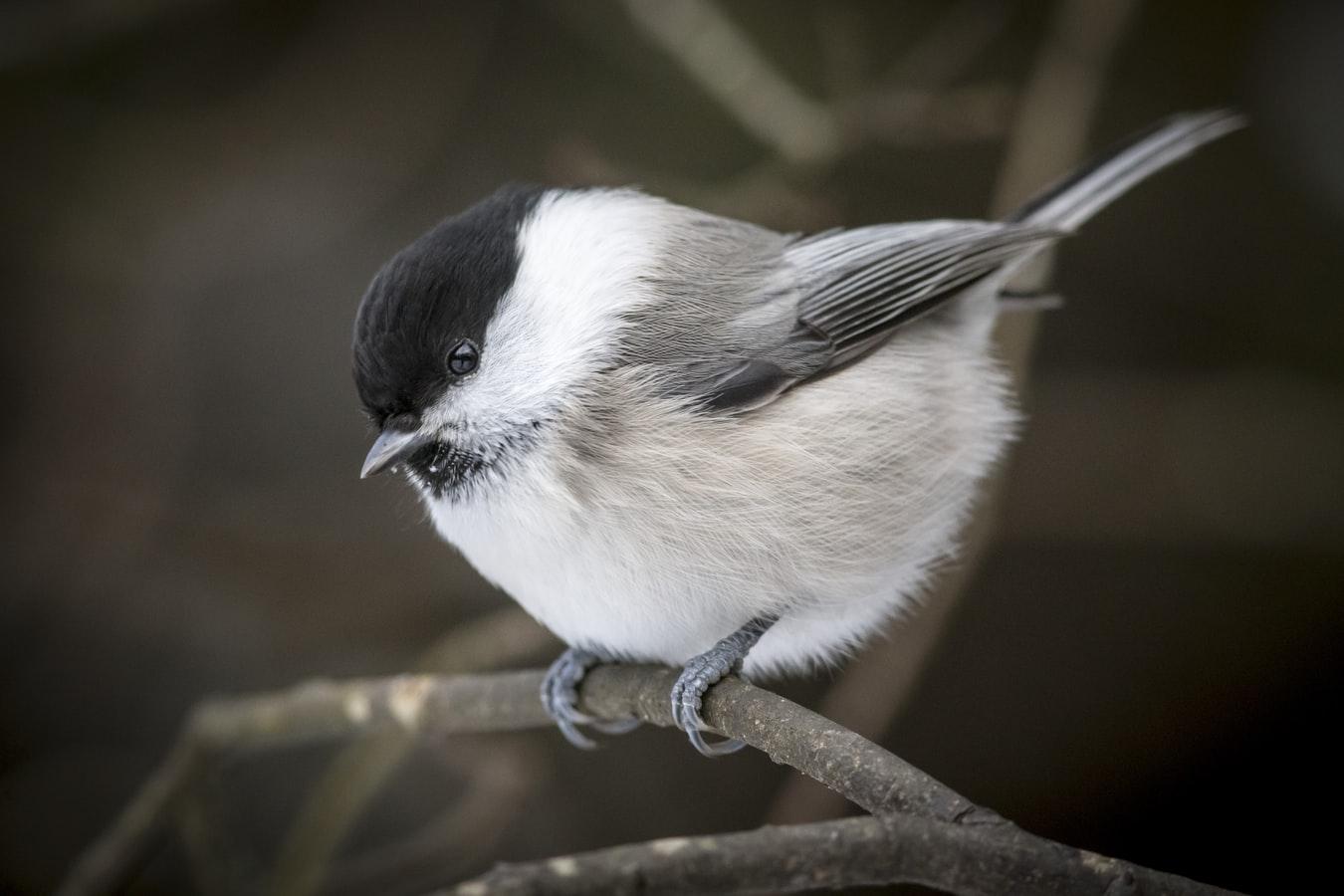 Where do birds go when the wind blows