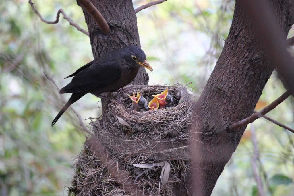 do mother birds sleep in the nest with their babies
