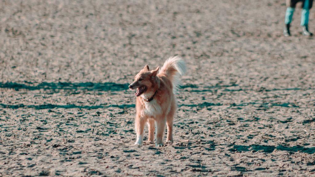 can dogs eat tajin