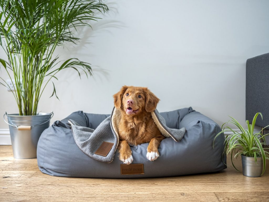 how to keep house clean when dog is in heat