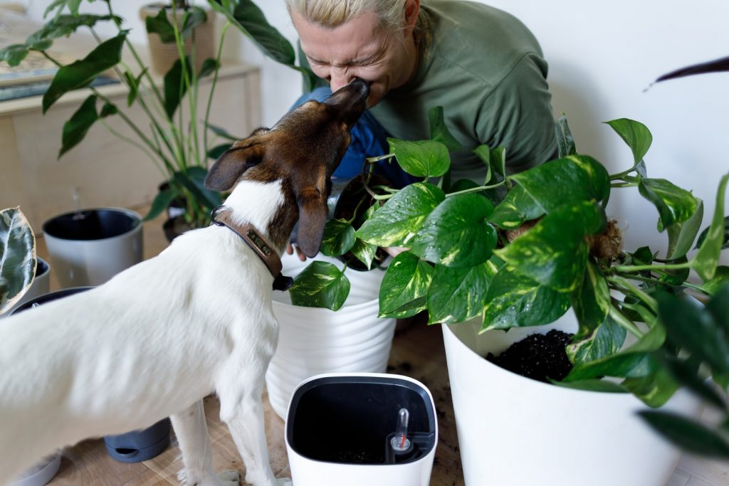 why do dogs like human saliva