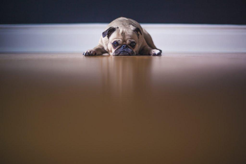 does dog poop dissolve in rain