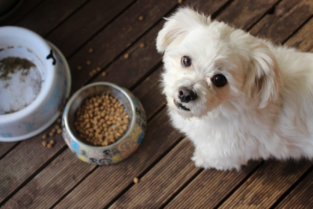 can dogs eat warm food