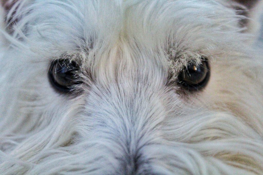 my dog stares at me creepy