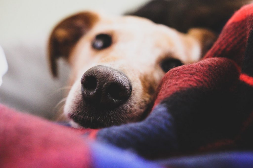 dog acting strange sniffing everything