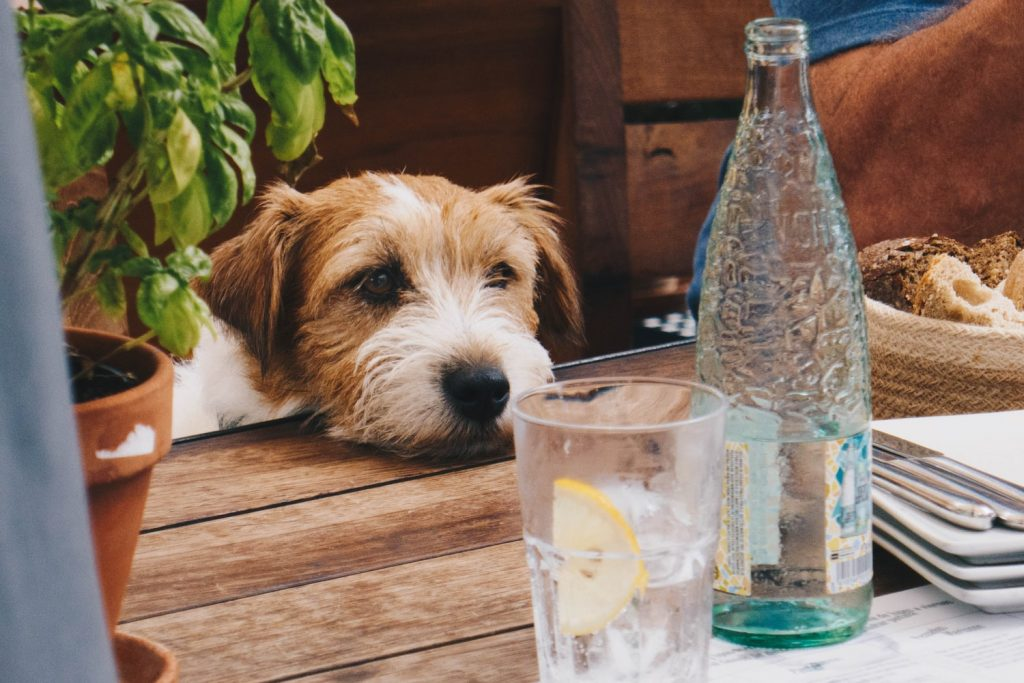 is dog deodorant safe