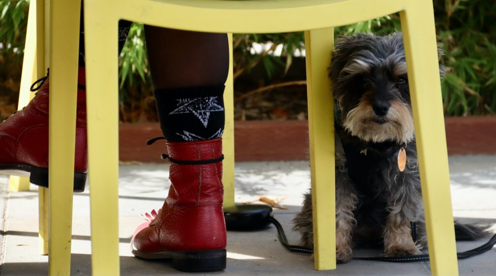 how to get dog to stop peeing on patio