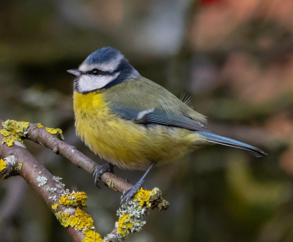 can birds eat goldfish crackers