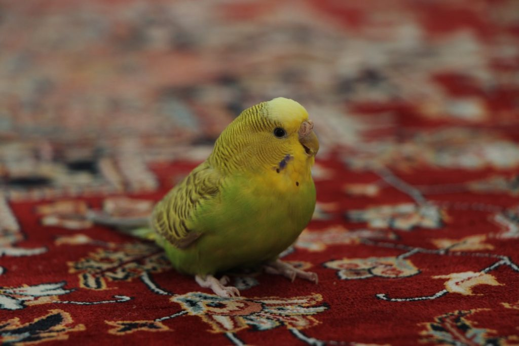 can birds sense emotions in humans