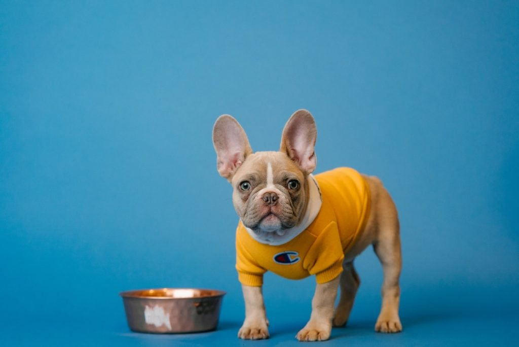 dog gorged on dry food