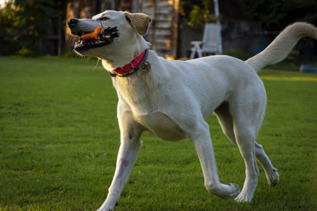 can dogs eat hazelnut butter