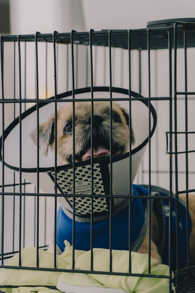 should a dog be able to sit up in crate