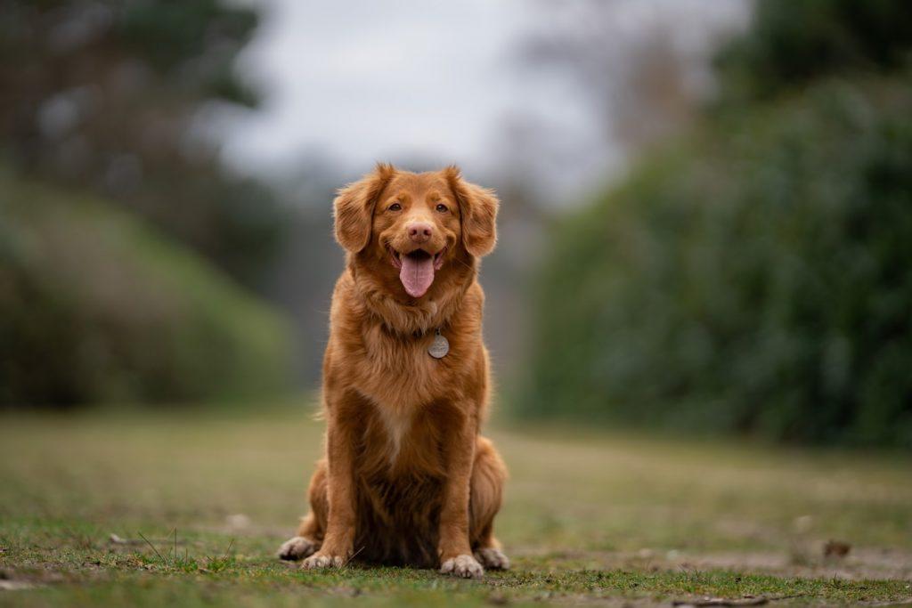 can dogs eat sunflower butter