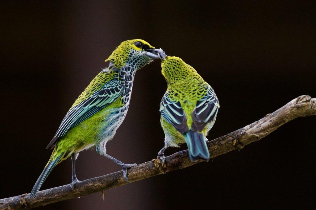 can birds eat cat food