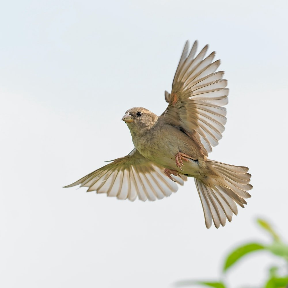what does it mean when a bird puffs up