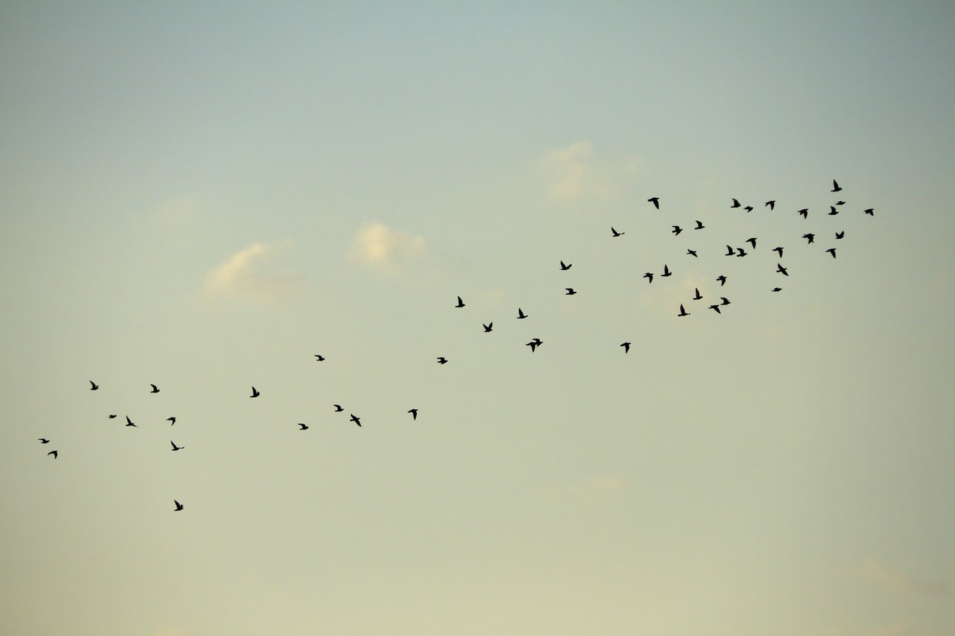 What does it mean when a lot of birds are chirping