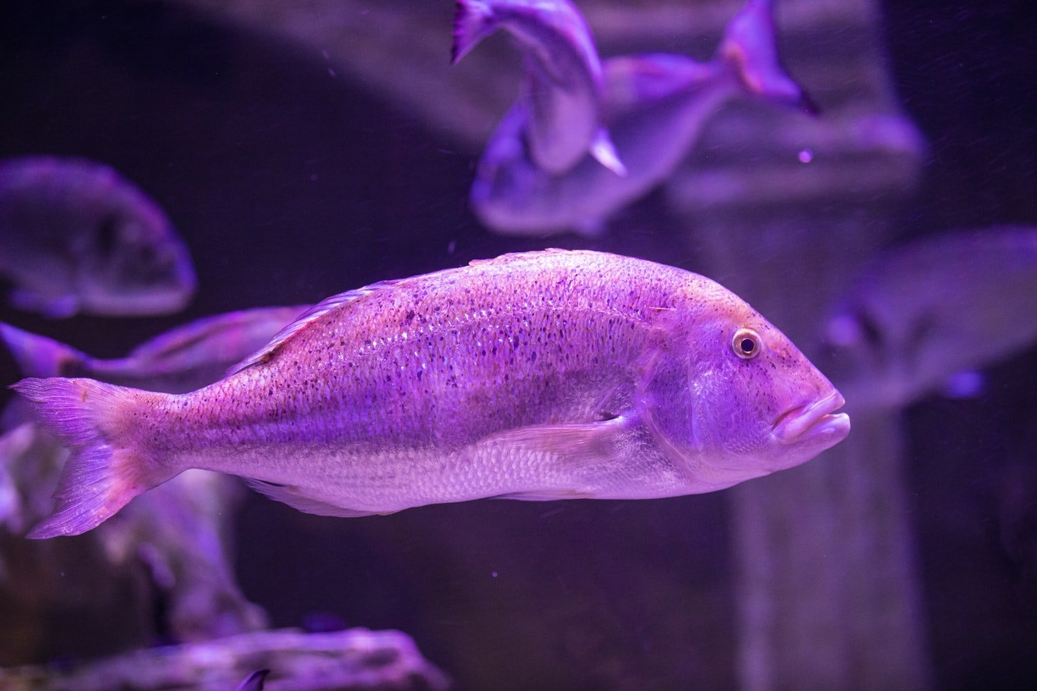 can a fish tank light be too bright