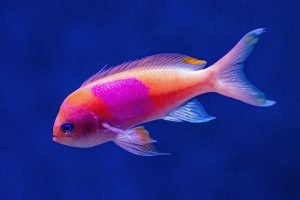 How long can fish survive in tap water