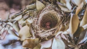 do birds use human hair for nests