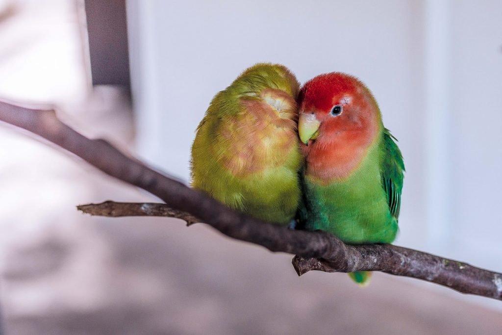 Can birds sleep with noise