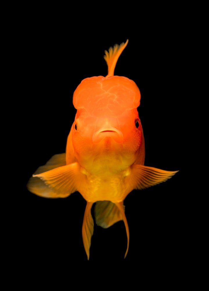 can algae wafers kill fish