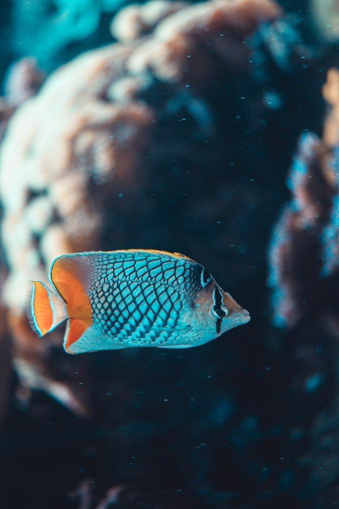 why do half of my fish have bloodshot eyes