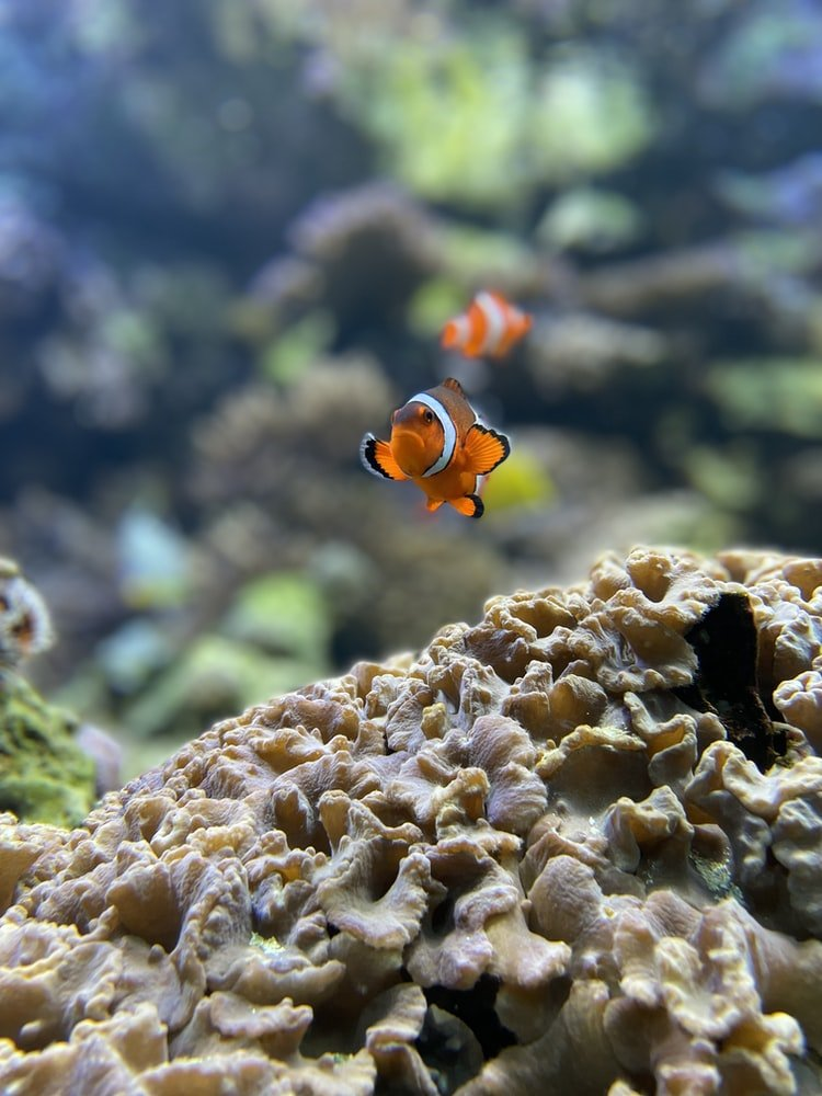 Do fish get sad when other fish die