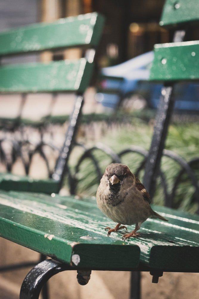 do birds spit