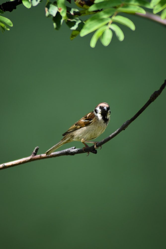 how far should a bird bath be from a bird feeder