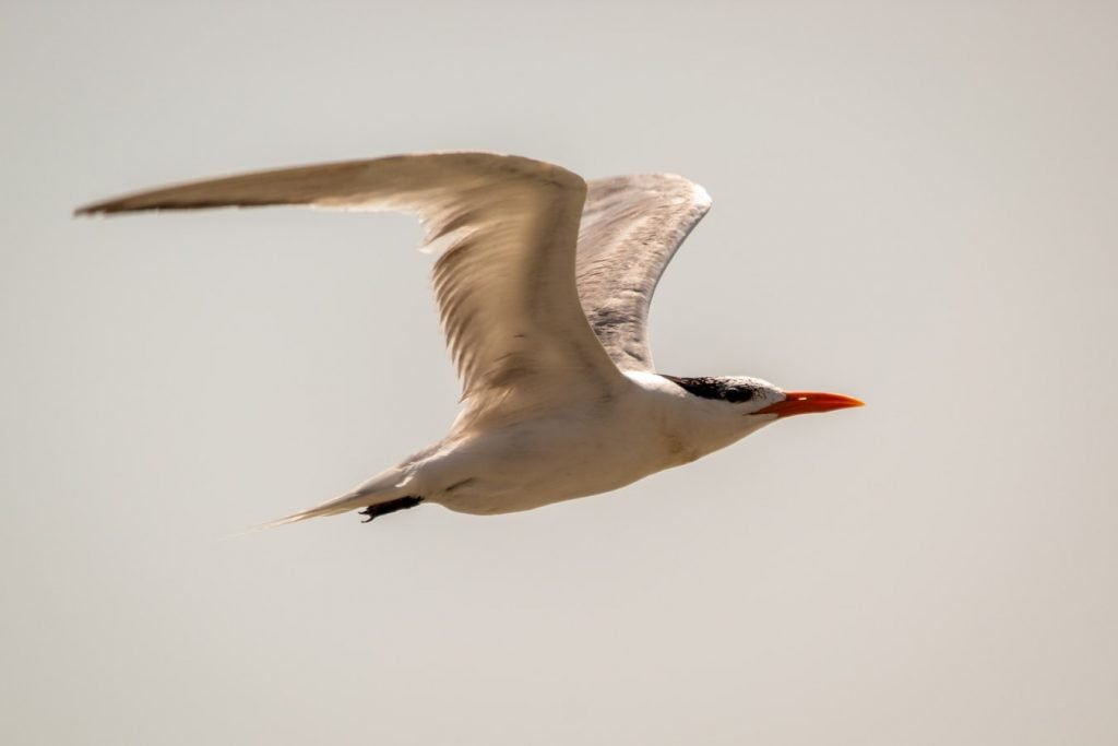 birds that can hover