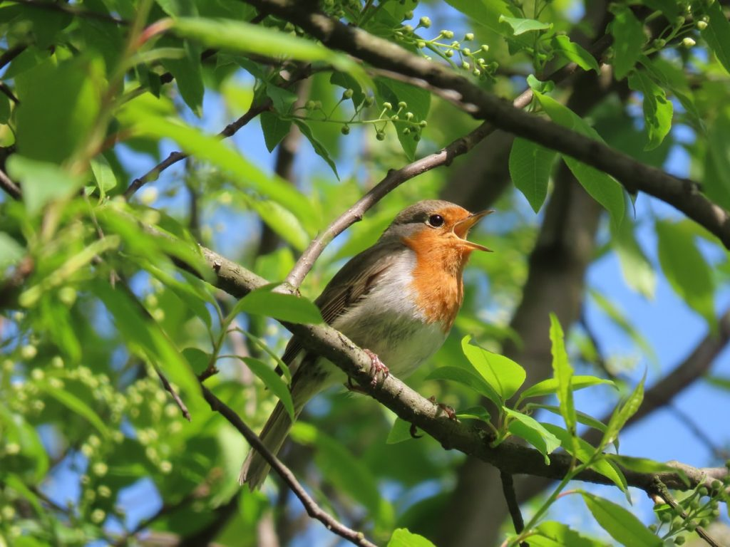is tissue paper safe for birds