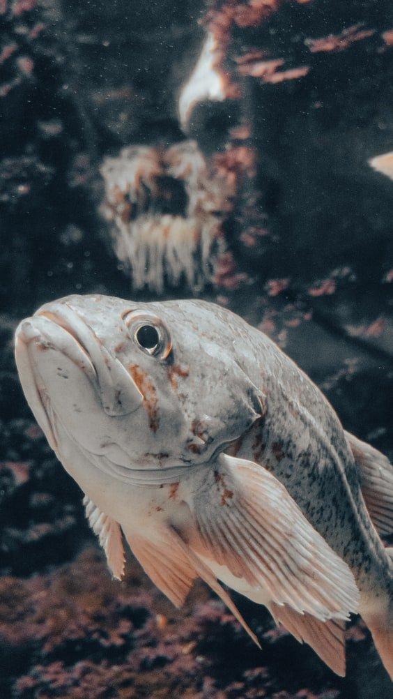 are fish happy in tanks