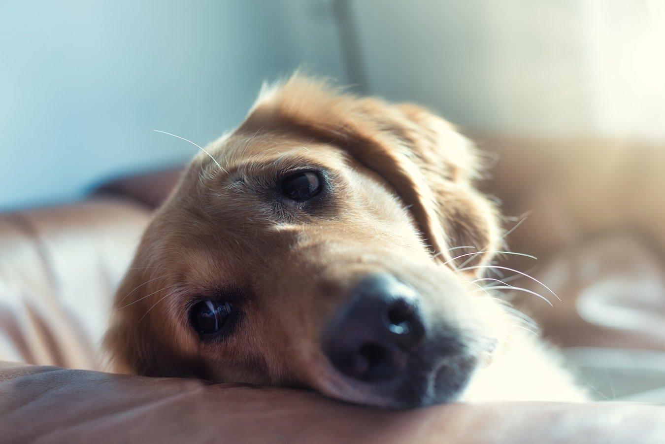 Can dogs eat pistachio ice cream